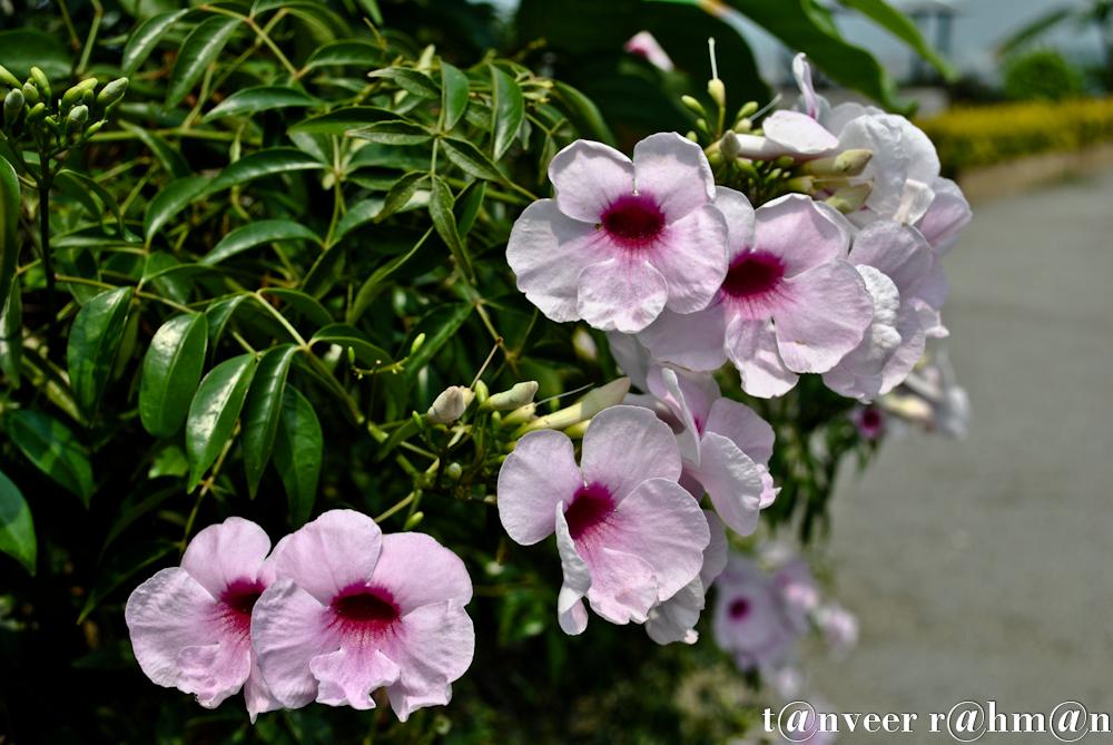 #Beautyful Flower – Seasonal Beautiful Flowers of Darjeeling