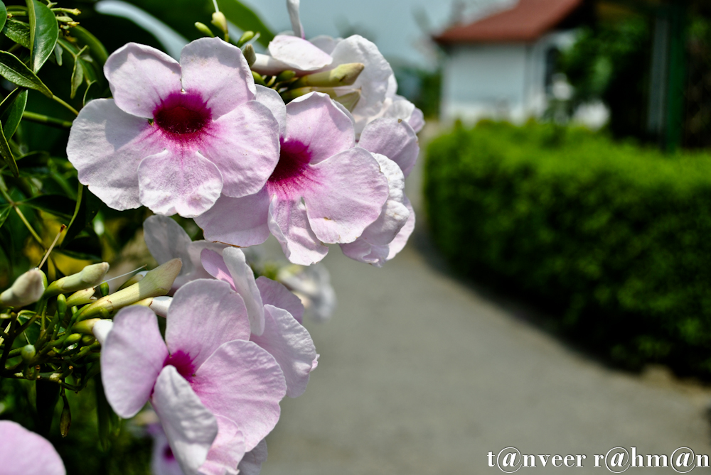 #Beautyful Flower – Seasonal Beautiful Flowers of Darjeeling