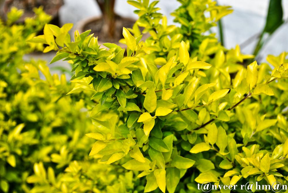 #Eponymous – Seasonal Beautiful Flowers of Darjeeling