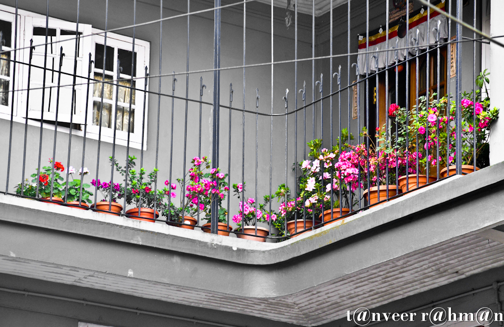 #Different color azaleas in the flower pots, red, pink, crimson etc. Except the 2 fower pots on left have red & white geraniums