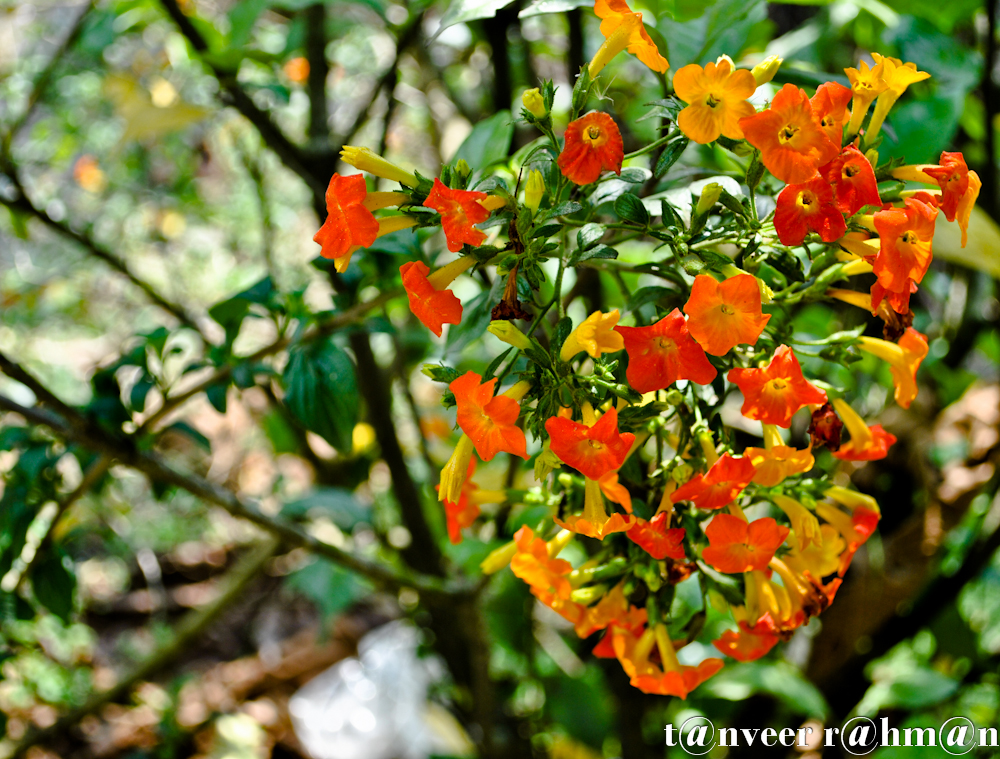 #Unknown Flower – Seasonal Beautiful Flowers of Darjeeling
