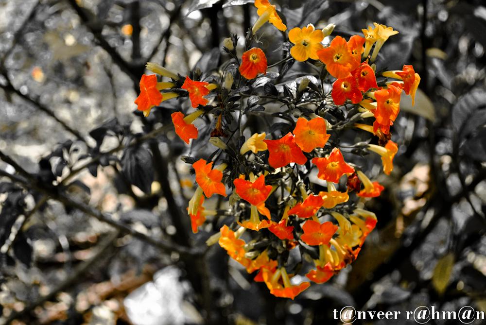 #Unknown Flower – Seasonal Beautiful Flowers of Darjeeling